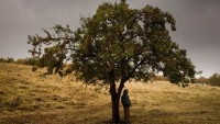 Örsan Gürkan yazdı: Bir Toplumun Otopsisi